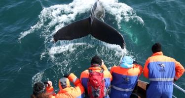 ballenas-samaná