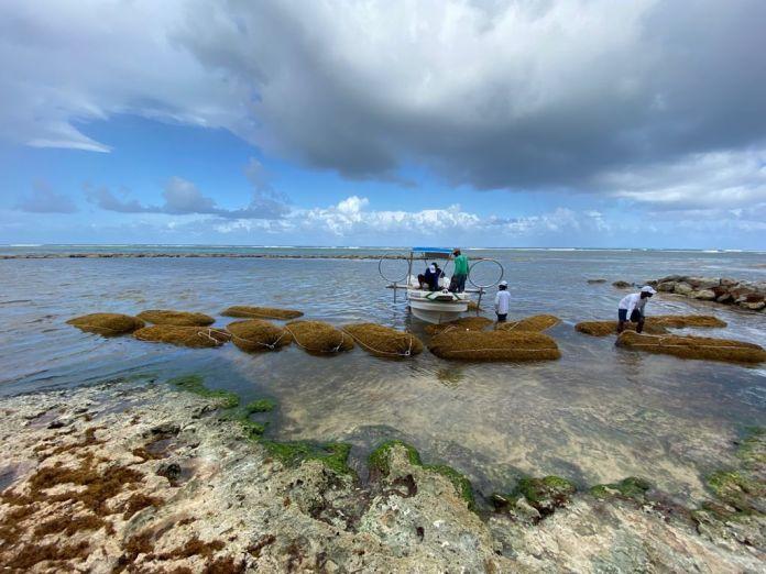 SOS Carbon, innovadora propuesta para hacer frente al sargazo en playas de RD